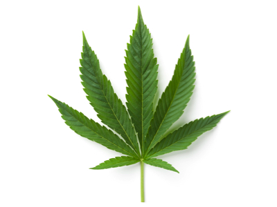 Marijuana Leaf, Credit: Stock Photography