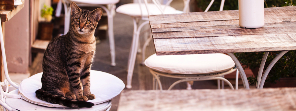 Cat Sitting On A Chair, Credit: Stock Photography