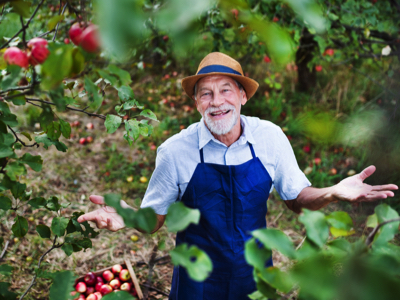 Happy Senior in Orchard, Credit: Stock Photography